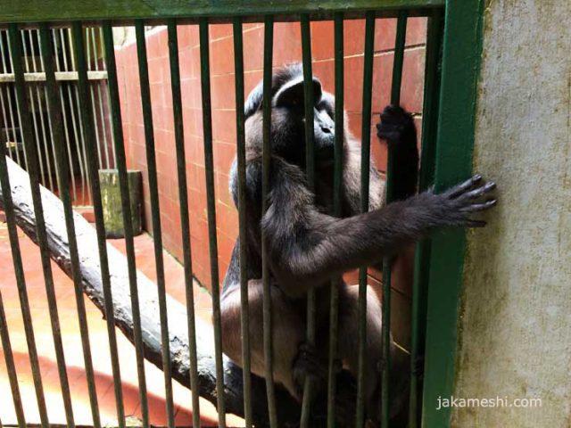脱出を狙う猿