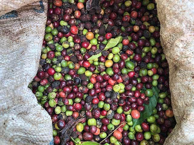 バリ島の名も無き美味しいコーヒーを求めて...バリ島旅行記Vol.3